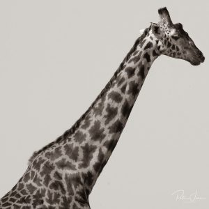 Giraffe print 2227 black and white